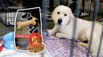 Retiran del mercado peligroso alimento para perros tras descubrir que los estaba envenenando