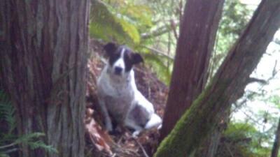 La perra de un excursionista muerto se quedó junto a él y ladró para que los rescatistas lo encontraran