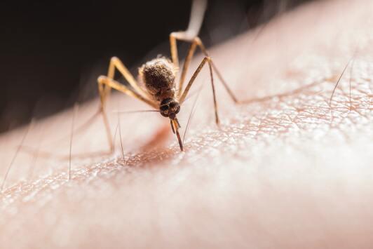 Autoridades detectan al primer mosquito portador de Zika en Sacramento