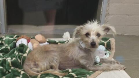 Evento para adopción de mascotas en Mesa