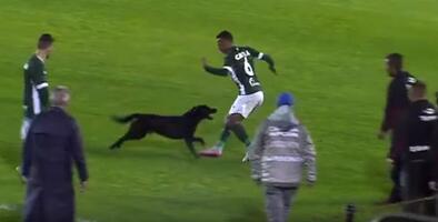 Perro invade cancha y trata de morder a jugador en el fútbol brasileño