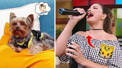 #DAEnUnMinuto: Tobi es un perrito muy estresado, y Ana Patricia canta como la Tigresa del Oriente
