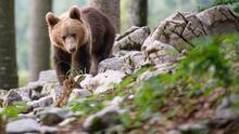 No solo para desbloquear móviles: el reconocimiento facial servirá también para identificar a osos y vacas