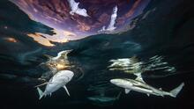 Belleza bajo la superficie: el Premio Internacional de Fotografía Subacuática 2021