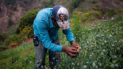 La Sierra de Guerrero, el lugar de donde sale alrededor del 50% de la amapola que llega a EEUU
