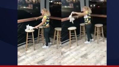 Detienen a mujer que maltrató a un gato en Bayamón
