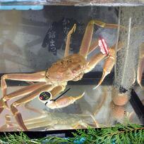 Este cangrejo rompió todos los récords en una subasta en Japón