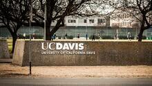 Muere atropellado un oso que deambulaba por el campus de UC Davis
