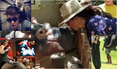 Celebridades en peligro: famosos y sus encuentros cercanos con animales salvajes