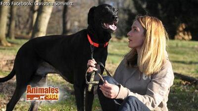 Animales 360 con Xiomara: mesera recibe mil dólares de propina para salvar a su perro