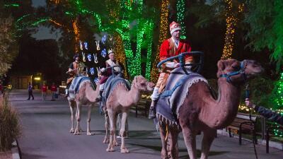 ¡Phoenix Zoo festeja Día de Reyes!