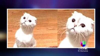 GYF digital: ¡El gato lo confirmó! Taylor Swift y Calvin Harris están saliendo