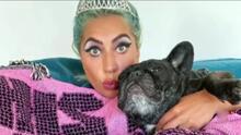 Los dos perros que robaron a Lady Gaga podrían costar hasta 20 mil dólares cada uno