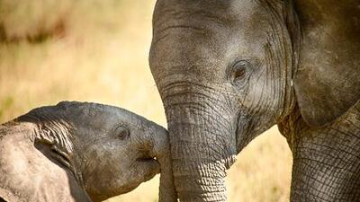 Lo que los elefantes nos pueden enseñar sobre la prevención del cáncer