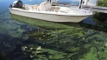 Advierten sobre la presencia de algas tóxicas en lagos y ríos de Arizona