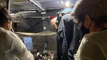 Hallan 26 perros y cachorros hambrientos dentro de una jaula abandonada en una carretera de tierra en Florida