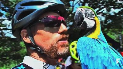 Video of macaw and cyclist training together becomes viral