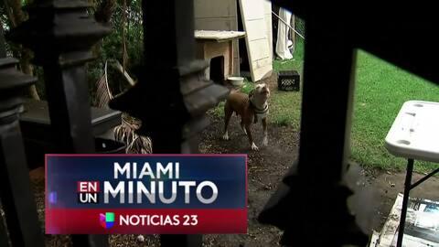 'Miami en un Minuto': al hospital regional de Kendall fue trasladada la niña que fue atacada por un perro