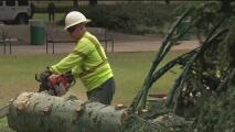 Ayudar al medio ambiente, el objetivo del programa de reciclaje de árboles de Navidad en Houston