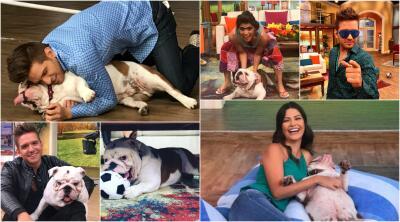 El Dasa y su perro Benito se robaron el show, revive sus mejores momentos en fotos