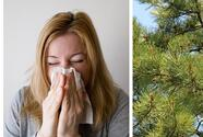 It's the beginning of the 'cedar fever' season in South Texas and these are the symptoms you should know about