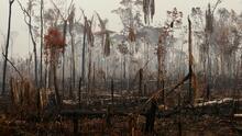 Por qué es tan grave que Bolsonaro rechace la ayuda que ofreció el G7 para apagar los incendios en el Amazonas