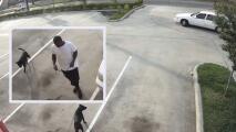 Autoridades buscan identificar a sospechoso de abandonar a un perro en un estacionamiento