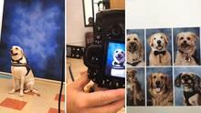 Incluyen en el anuario escolar a los perros de apoyo que ayudaron a jóvenes sobrevivientes de la tragedia de Parkland