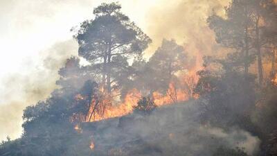 Incendios forestales siguen arrasando en Estados Unidos