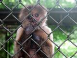 Comisión del Oeste de la Cámara de Representantes abordará caso del Zoológico de Mayagüez