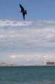 Puerto Peñasco, en Sonora, es uno de los destinos turísticos preferidos por los residentes de Arizona especialmente durante el verano. En el marco de la celebración del Día Mundial de los Océanos, el Centro Intercultural de Estudios de Desiertos y Océanos (CEDO) en colaboración con la alcaldía de Puerto Peñasco a través de Ecologia y Zofemat y el Comité de Playas Limpias y Manny´s Beach Club, llevaron a cabo diferentes actividades abiertas al público. <br>