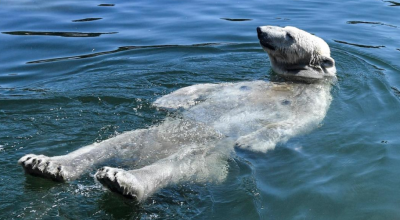 Una ola de calor derrite a Europa: así enfrentan sus residentes las temperaturas récord (incluido este oso polar en Alemania)
