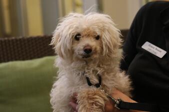 Puede adoptar perros mayores sin tener que pagar tarifa de adopción en un evento este fin de semana