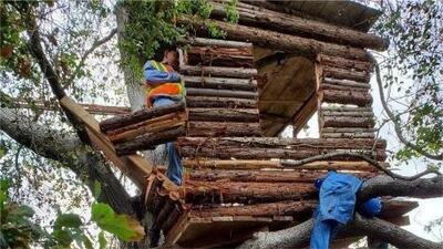 Encuentran a un sospechoso de robo viviendo en una casa árbol en las montañas de Pomona