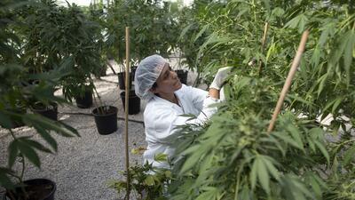 Colombia legalizará la marihuana con fines medicinales