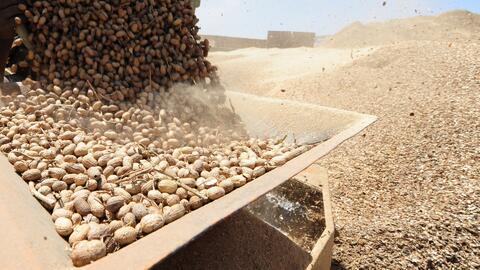 Población de niños alérgicos al cacahuate se ha triplicado entre los años 1997 y 2008, según estudio