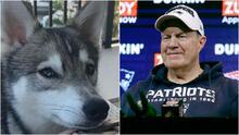 ¡Conoce a Nike! El perro que se hizo famoso en el Draft de la NFL
