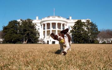 Los perros presidenciales: estas son las mascotas que pasaron por la Casa Blanca antes de la llegada de Trump (fotos)