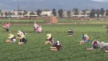 Clínica de vacunación para trabajadores del campo el próximo 8 de marzo en el condado San Joaquín