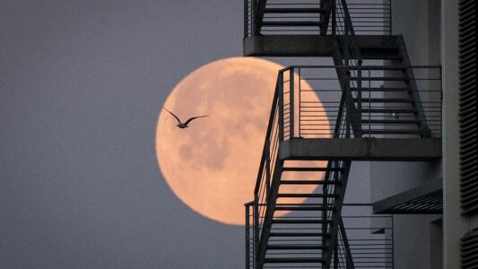 ¿Tú también viste la súperluna? Te contamos por qué se llama Luna Rosa