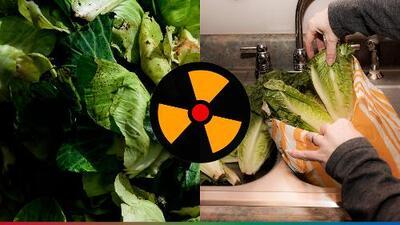¡Cuidado! Si consumes lechuga romana estás en riesgo de contraer E.coli