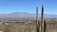 Tumamoc Hill, la popular atracción para los amantes de las caminatas en el sur de Arizona