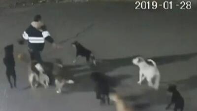 Mujer muere tras ser atacada brutalmente por una jauría de perros en México