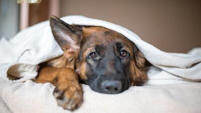 Las mujeres duermen mejor acompañadas de un perro que de un hombre