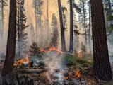 Incendio Sequoia se propaga por las montañas del condado de Tulare quemando más de 100 mil acres