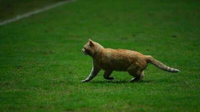 ¡Los felinos al ataque!