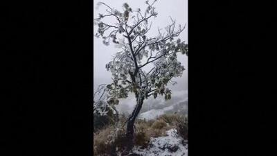 Nieve en Hawaii: Una potente tormenta cubre de blanco la isla de Maui
