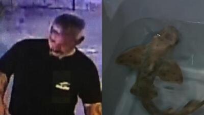 Revelan la razón del robo del tiburón en San Antonio: reemplazar a una mascota que murió