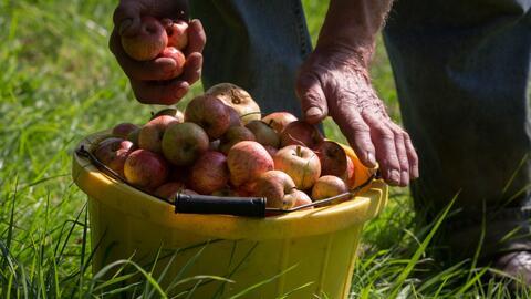 No te pierdas el festival de frutas en Homestead