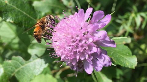 Temporada de alergias: ¿qué podemos hacer para evitarlas entre los niños?